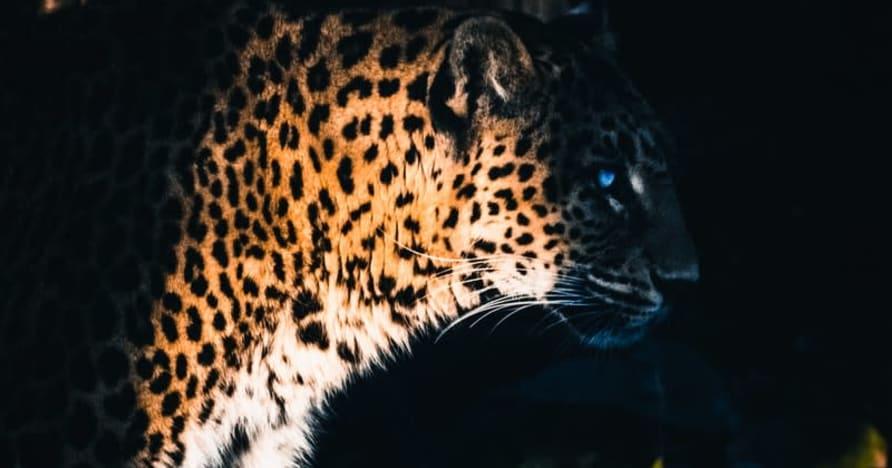 Yggdrasil Partners ReelPlay for å frigjøre Jaguar SuperWays fra Bad Dingo